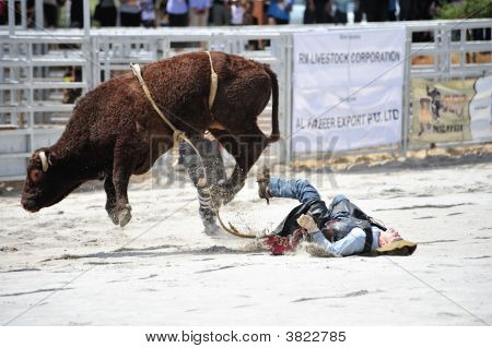 Falling Cowboy At A Rodeo Show