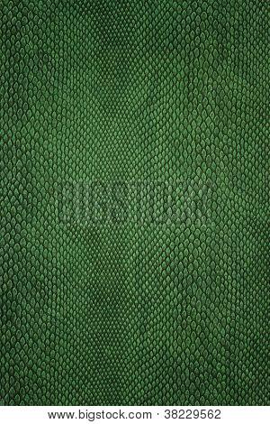 snake skin green