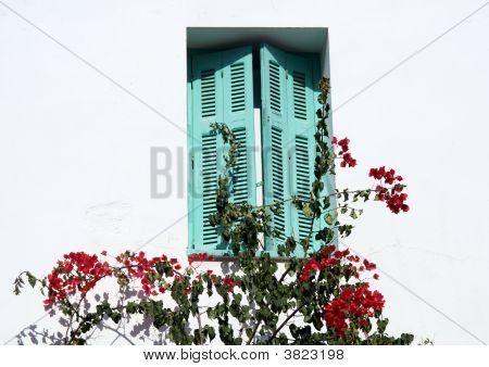 Shutters And Bougainvillea