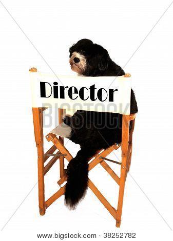 Director Dog