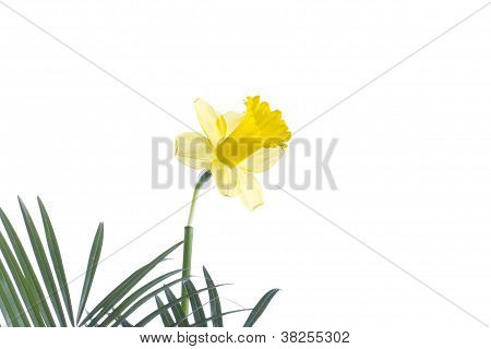 a yellow flower on a leaf