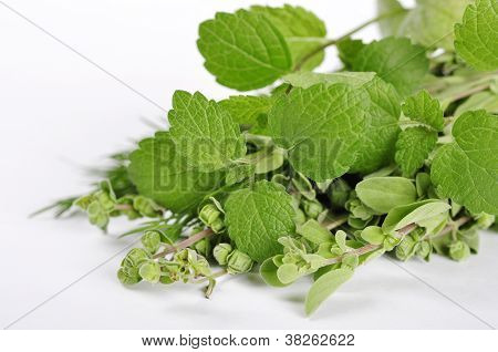 Mint And Marjoram
