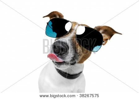Dog With Funny Shades