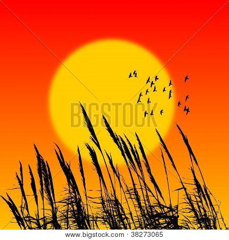 Vector landscape with sunet and reed silhouettes