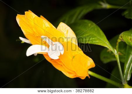 exotic thin bright orange flowers