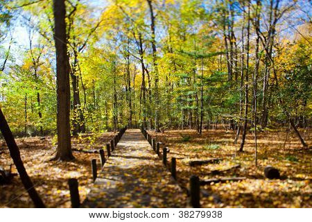 autumn trees and walkway