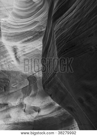 Black And White Canyon Antelope