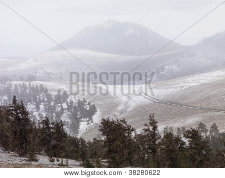 Pine Trees And Mountains In Background