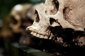 foto of cranium  - skeleton skull human sacrifice creepy dead person cranium - JPG