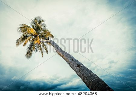 coco tree with bule sky