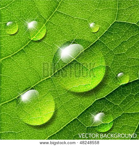 Vector water drops on green leaf macro