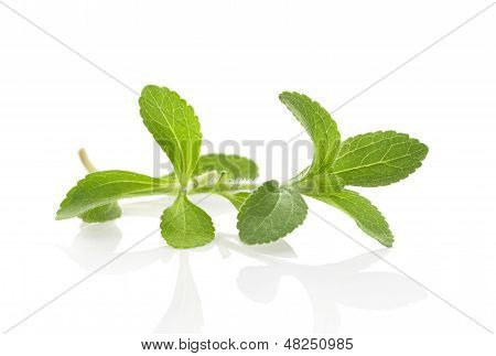 Stevia Isolated On White.