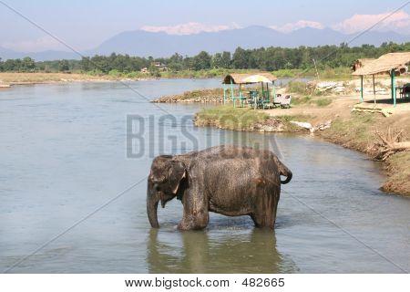 Chitwan Elephant - Nepal