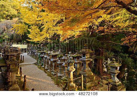 Fall foliage at Kasuga-taisha shrine in Nara