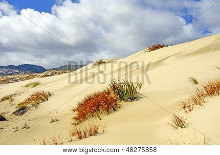 Clouds Over Sand Dunes And Grasses