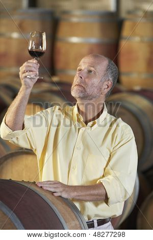 Middle aged man inspecting quality of red wine in cellar