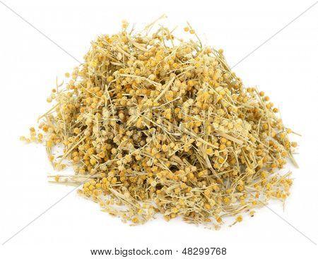 Medicinal plant. Dry Sagebrush