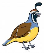 stock photo of quail  - Cartoon illustration of a male California Quail or California Valley Quail or Valley Quail  - JPG