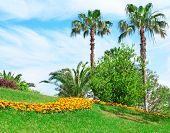 picture of swales  - Tropical palm trees in a beautiful park - JPG