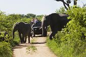 stock photo of  jeep  - Two elephants crossing dirt road with tourists in jeep in background - JPG