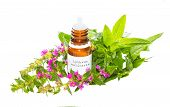 Essential Oil From The Lythrum Salicaria Plant
