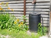 stock photo of downspouts  - Plastic barrel for recycling rainwater with sunflowers - JPG
