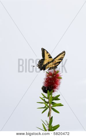 Butterfly On Tip Of Flower