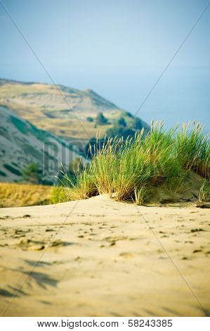 View of Dead Dunes, Curonian Spit and Curonian Lagoon, Nagliai, Nida, Klaipeda, Lithuania