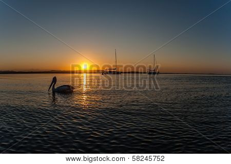 Pelican Bird Yacht Lagoon Colors Sunset