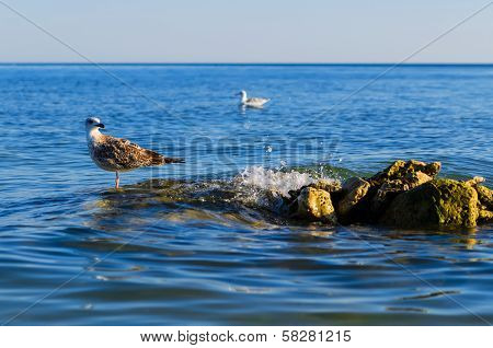 One Seagull Stending On Steady Stones In A Sea