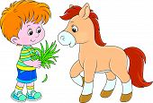 stock photo of feeding horse  - Little boy feeding a pony with grass - JPG