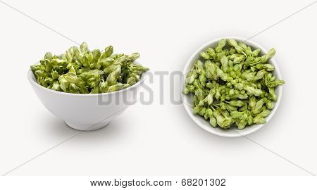 cowslip creeper flower in a small bowl, isolated on white background, view from front and top