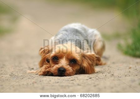 Sad Dog Lying On The Road