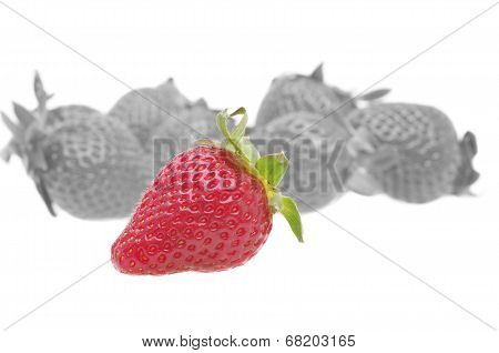 Genetically Strawberry Concept