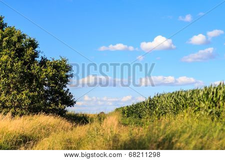 Rolling Hills With Cloudy Sky. Summer Landscape With Green Grass, Road And Clouds.