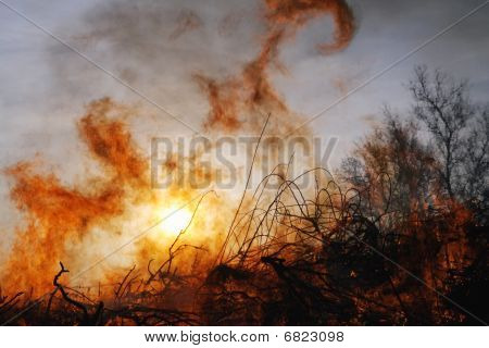 forest fire and sun