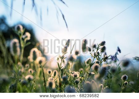 Summer flowers meadow