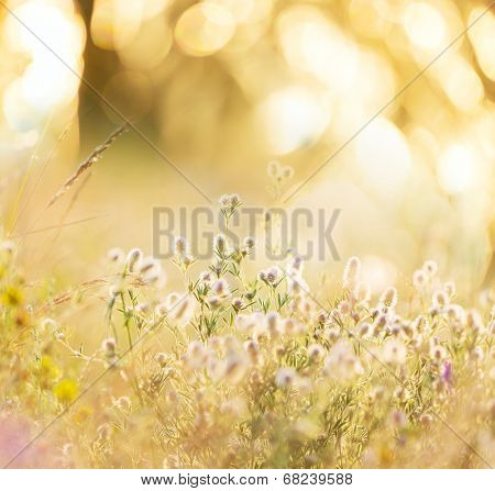 summer flowery meadow