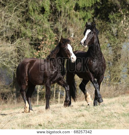 Nice Horses Running On Pasturage Together