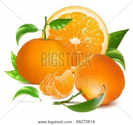 Fresh tangerine fruits and orange with green leaves and slices. Photo-realistic vector illustration.