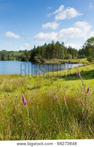 Tarn Hows Lake District National Park England uk one of the top scenic destinations