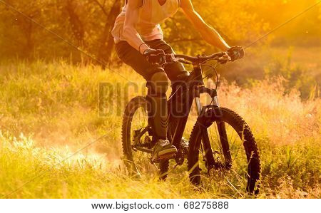 Cyclist Riding the Bike on the Morning Trail in the Beautiful Summer Forest at Sunrise