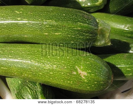 green zucchini in sun