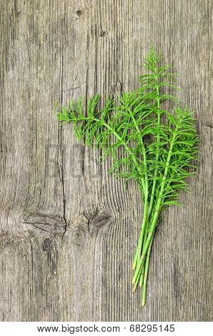 Harvested Horsetail