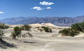 stock photo of mesquite  - Sand dunes in Mesquite Flat Sand Dunes Death Valley National Park California USA - JPG