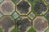 image of interlocking  - the interlocking concrete pavement with moss growing along - JPG