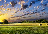 picture of pastures  - Tranquil Texas meadow at sunrise with hay bales strewn across the landscape - JPG