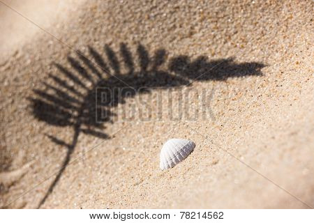 Shell And The Shadow Of The Plants On The Sand Beach