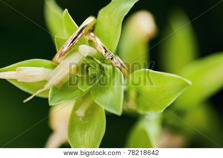 Two Wedding-ring On Green Flower