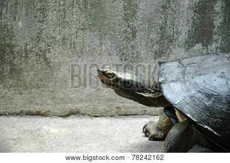 Turtle in the Concrete Jungle